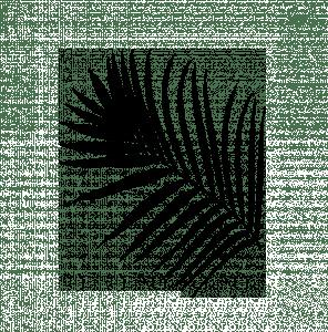plante_black